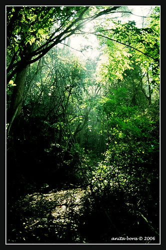 Lush forest