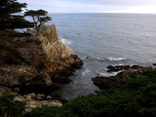 Carmel Coastline