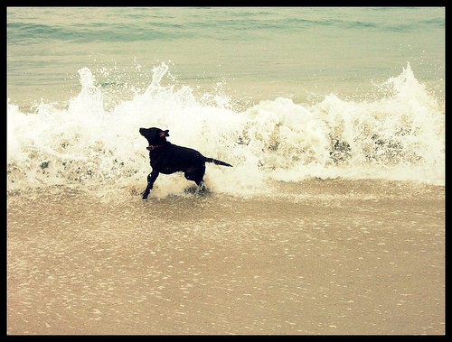 Hitting the Waves at Dog Beach