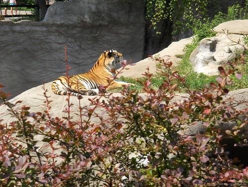 Det Zoo 072808_0005