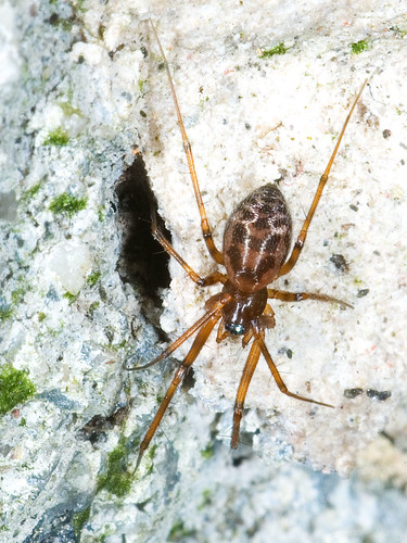 Een klein spinnetje