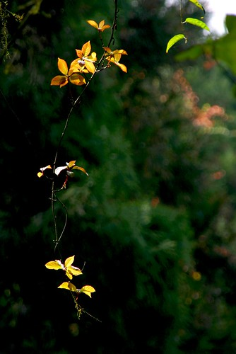 Lighted Leaves