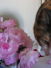 Pandora's Roses