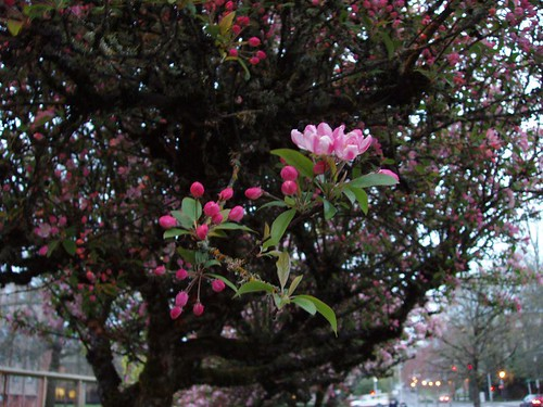 See the blossoms.