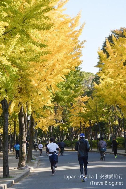《大阪景点推荐》日本大阪城公园:体验秋天银杏片片与庶民日常生活的公园