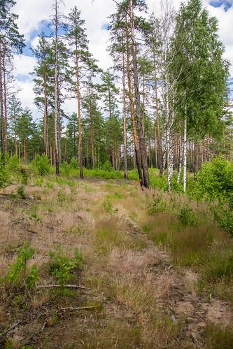 Sausas miškas