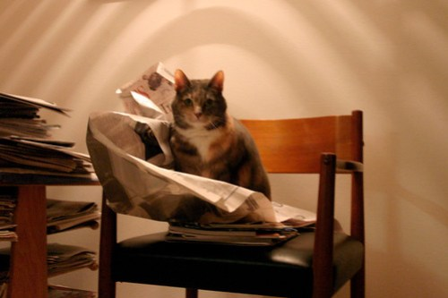Cat attacking newspapers