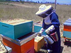 Gaby apicultora
