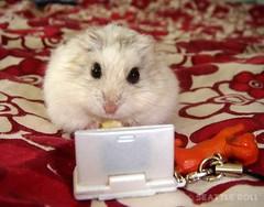 Hamster Frag!