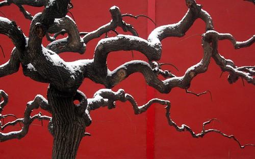 arbre rouge et blanc