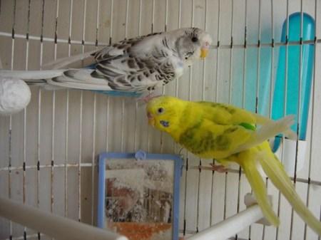 Morgan y Merlina