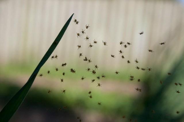 New Spiders