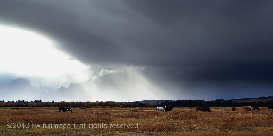 Horses on Elk Meadows