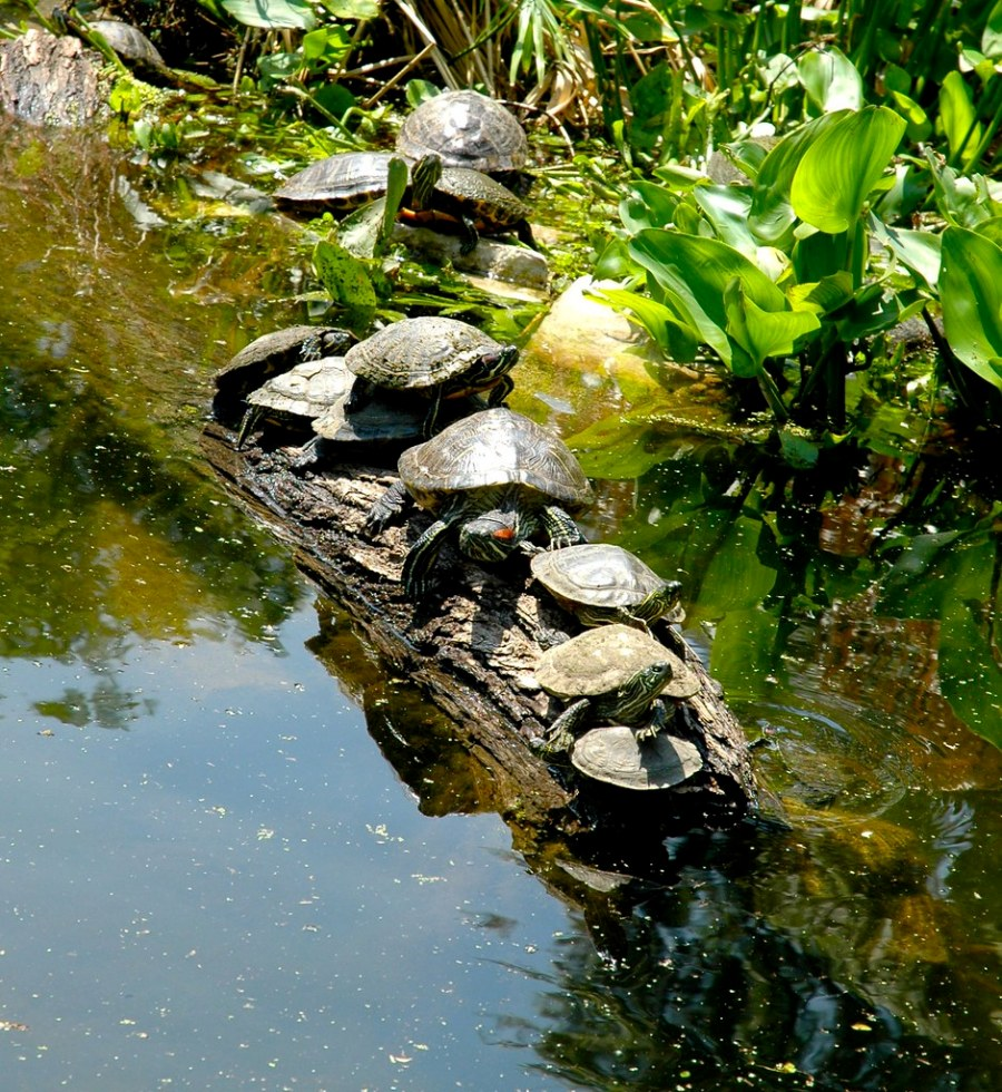 All Turtles in a Line