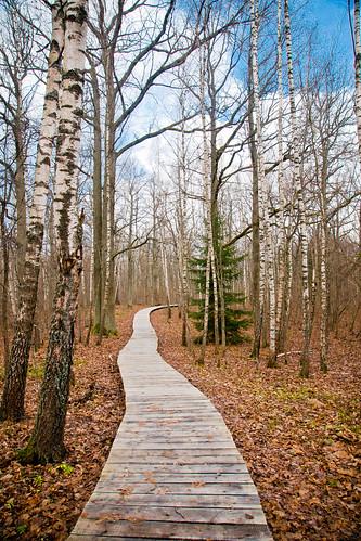 Takas į rudenį | Trail in autumn