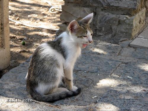 Delphi_IMG_2464_100917