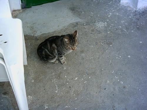 El gato de la abuela 2