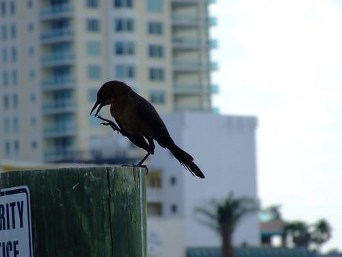 Scratching A Quick Beak