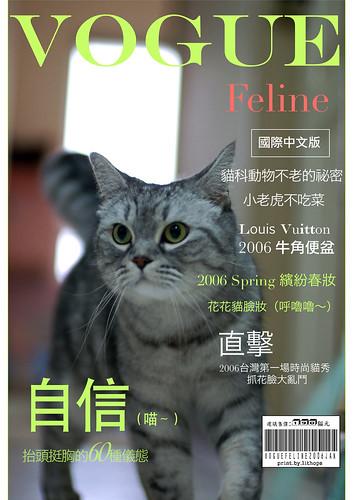 FelineVOGUE