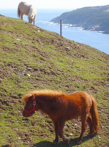 Hillside Grazing