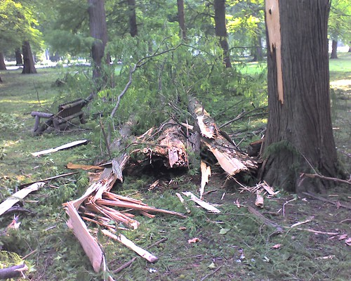 Pictures of St. Louis windstorm damage from 7/19/06 - Lightning exploded tree