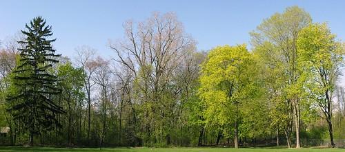 Woodlot (April 26)