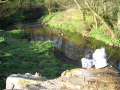 The calming brook