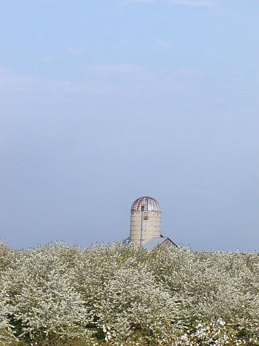 Orchard Silo