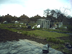 Top of the allotment on the 10th Apr