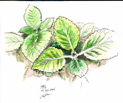 Green Plant (15 Apr 2006)