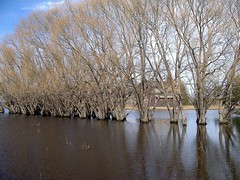 Wading trees