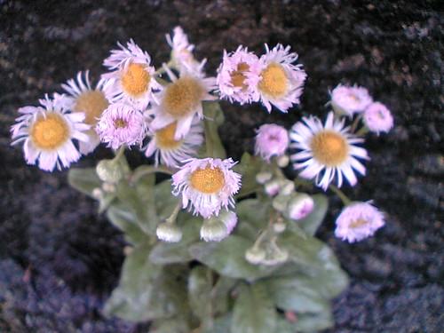Pretty in Pink wildflower