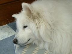 Old Girl Resting