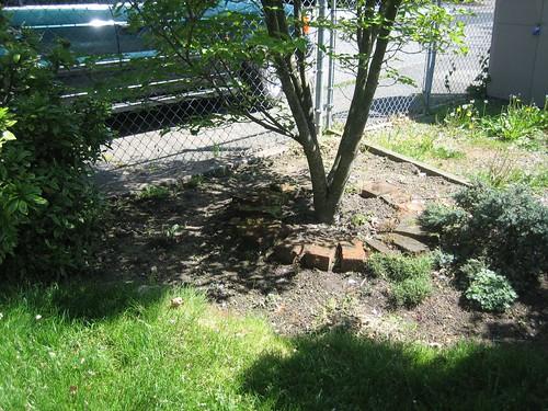 Scruffy Garden