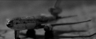 avioncito.jpg