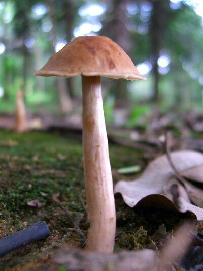 Mushroom 190406
