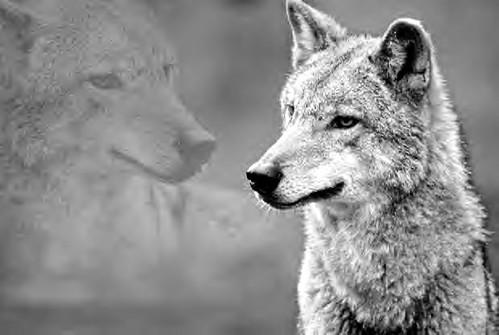 America is Comrade Wolf, per Putin