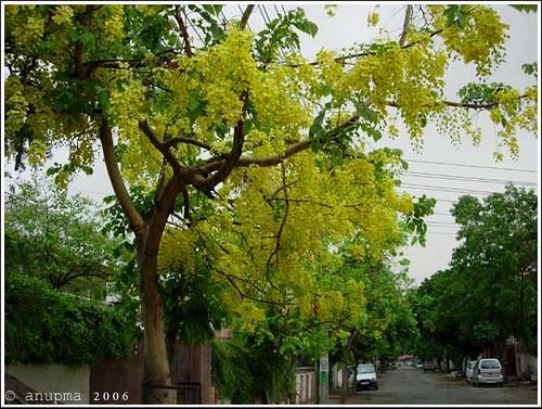 Yellow in the rain