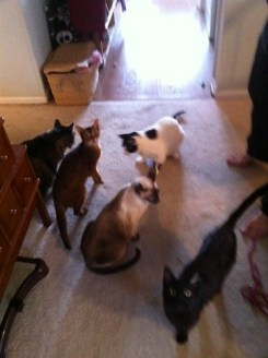 Cats party on xmess!
