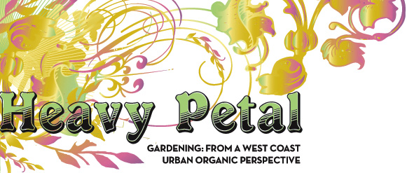 Heavy Petal: Gardening Blog from the West Coast