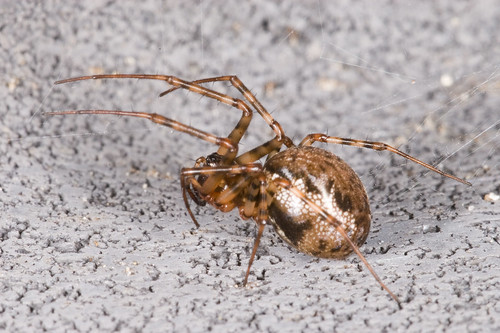 Een spinnetje