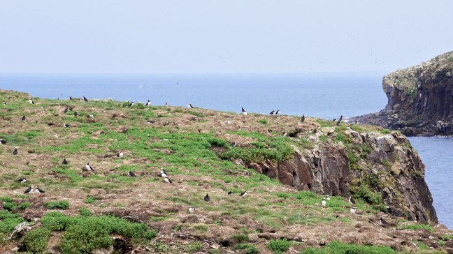 Viewing puffins with whales in the background