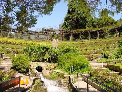 Berkeley Rose Garden Codornices Park MyEastBayAgent