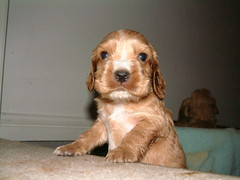 One of Eve's Puppies