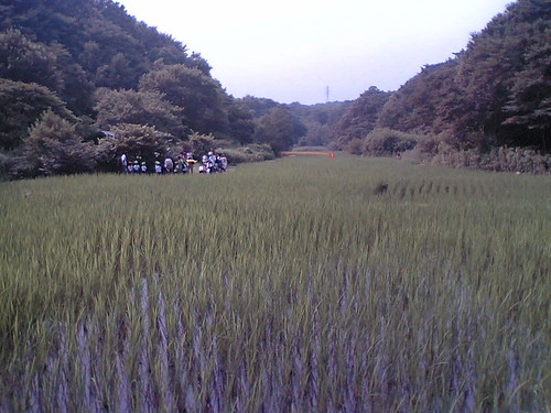 Maioka rice field