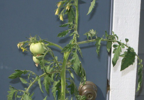Baby maters