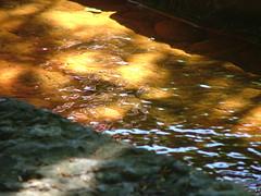 Lemniscaat in het water