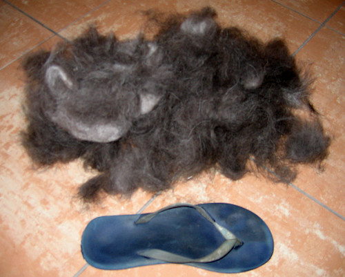 Where did all the fur come from?
