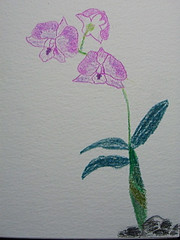 Orchids 2 - by Mrs RamblingLibrarian