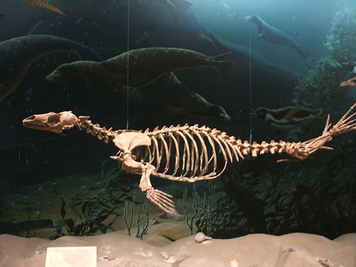 Ichysaurus ?
